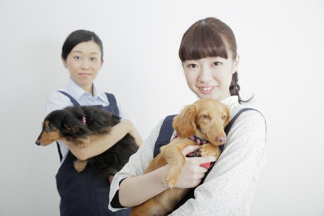 ペット業界の仕事内容や年収、失敗しない転職法